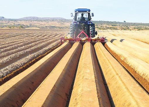 推进适度规模经营 大力发展精细农业