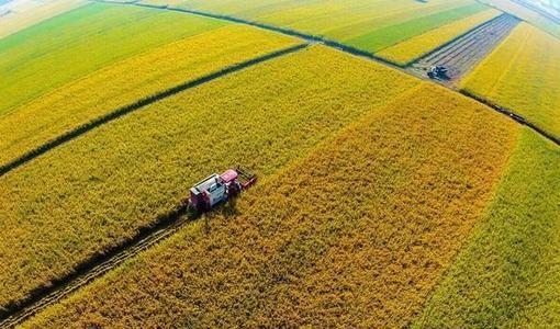 """全国政协委员赖应辉:利用""""双循环""""提升粮食保障能力"""