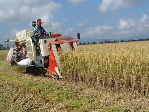 水稻机械化收获减损技术指导意见