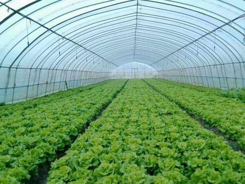 安徽省农业农村厅办公室关于印发春季蔬菜、水果生产技术指导意见的通知
