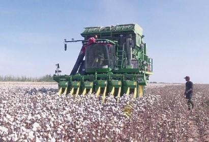 新疆棉花机收率近70% 机耕面积几乎全覆盖,机播率达88%