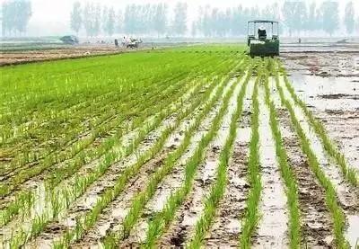 2021年东北水稻育插秧技术指导意见