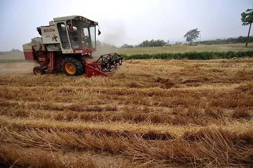 """今年小麦有望实现""""三增"""",收购准备基本就绪"""