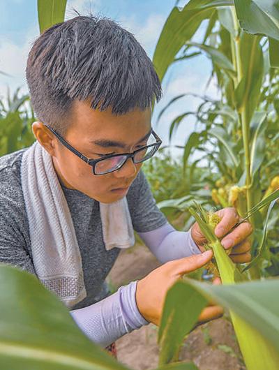 一个农民合作社的提质增效路